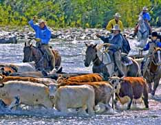 Ranchers are faced with a multitude of ecominic and environmental challenges, yet they stay the course because they love the rural way of life.
