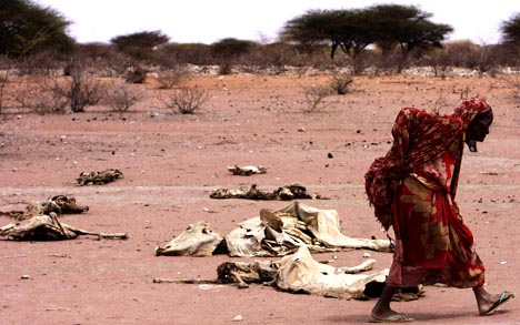 A woman walks past carcasses of cattle in the drought-stricken Eladow area in Wajir, northeastern Kenya.