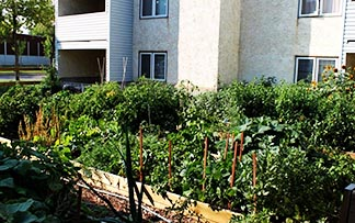 Citrus Court, a housing project of the Canadian Mental Health Association, has a community garden for its residents.