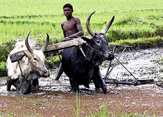Development and Peace says small farmers feed 70 per cent of the world, but cannot earn a decent living for themselves.